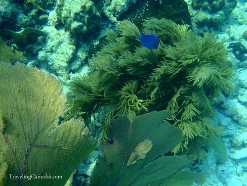 Belize Barrier Reef - Laughing Bird Caye, Belize
