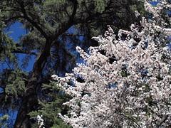 Spring, spring, spring! (miguelno) Tags: tree primavera zeiss pen 35mm spring olympus pb jena mc carl rbol mf cz praktica sobre carlzeiss f24 czj prakticar epl5