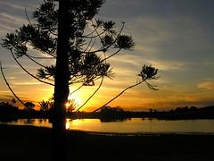 "Araucária (Claudio Marcon) Tags: trees sunset brazil sol brasil alberi tramonto searchthebest céu pôrdosol árvore pictureperfect araucária itaara fotoclube abigfave platinumphoto isawyoufirst diamondclassphotographer flickrdiamond platinumheartaward naturessilhouettes ""wonderfulworldmix"" top20sunsetsofourhearts claudiomarcon 100earthcomments claudiolmarconribeiro"
