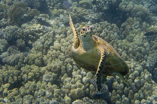 Schildkröte (Bild von Sebastian Gerhard)