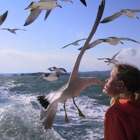 bird kiss girl