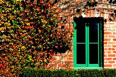 brick and ivy (Alicia Napier Photography (oc girl)) Tags: california autumn brick fall window nature grass leaves northerncalifornia composition landscape scenery wine ivy winetasting napa marketplace grassland winecountry yountville supershot thatsclassy thechallengefactory