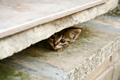 ...non fidarsi  meglio - my scared cat / gatto (Paolo Margari) Tags: life pet cats pets nature animal animals cat canon photography photo chats kat funny chat foto photographer kitty photographers hidden gato kit katze scared fotografia  macska gatto canoneos animali kot koka kedi fotografo katt kissa micio fotografi maka gatta pusa nascosto paka   italianphotographers pisic  impaurito macja paolomargari qattus conmo fotografiitaliani