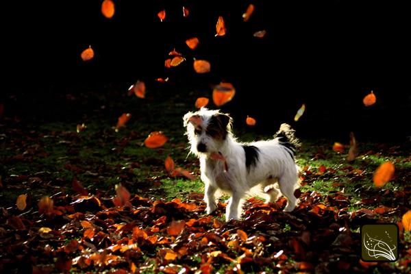 Les feuilles magiques