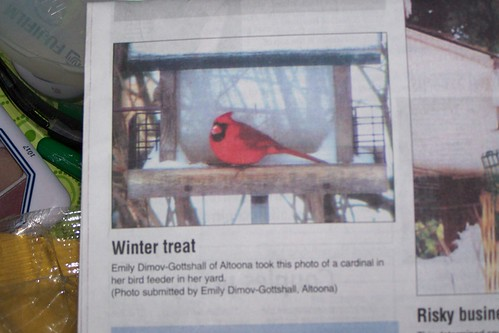 My cardinal made the paper! :)