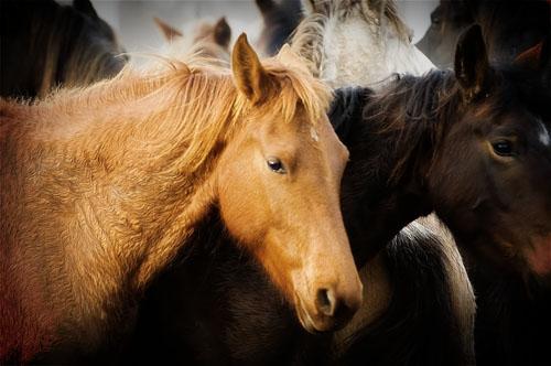 gathering mares 394