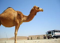 Ramlat es sabateyn (denismartin) Tags: arabia qat yemenia hadramaout denismartin