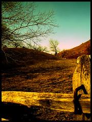 Desert (SwEeTcHy) Tags: wood blue shadow sky naturaleza tree nature colors yellow catchycolors landscape arbol photo spain desert natural asturias paisaje ps recuerdo infancia pradera asturies aller goldenglobe desertico