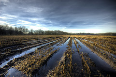 Still wet (Danil) Tags: blue winter sky holland reflection wet water netherlands dutch landscape corn nikon daniel nederland nat mais hdr drenthe hunebed oudemolen photomatix