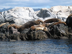 IMG_6696 (dinomuri) Tags: patagonia argentina 2008 worldtrip