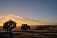 dawn (dalinean) Tags: dawn bush sigma australia outback sd10 westaustralia hyden kondinin treesubject karlgarin