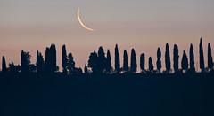 desiderio (David/.) Tags: italy moon crescent moonrise cypress toscana cretesenese flickrelite wwwsnowhengenet horriblyearly