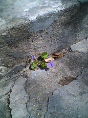 Flower in our steps
