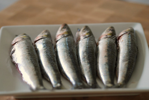 Fresh Greek sardines