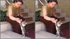 Kitty-Cross (Shahrokh Dabiri) Tags: 3d iran tehran sterography