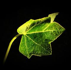 Out of the Abyss (Jenn (ovaunda)) Tags: black green blackbackground night dark utah lowlight sony onblack cedarcity dsch5 jennovaunda ovaunda