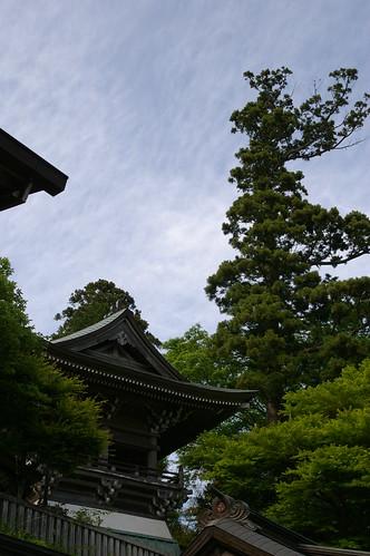 a tall pine
