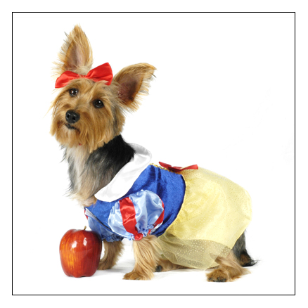 Redondo Beach Dog Park Halloween Hoedown