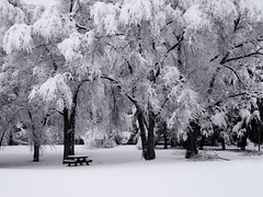 picnic (catnapping) Tags: trees winter white snow contrast table montana rboles picnic nieve feathers missoula invierno     winterbeauty lhiver   longlet wowiekazowie  lecontraste