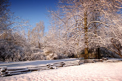 Snowy fence (Clint Voris, Alliance Images) Tags: winter snow fall fence landscape snowy  scenic frosty clint scenics winterwonderland snowytrees copyright frostyleaves snowyfence clintvoris allianceimages snowyleaveswinter