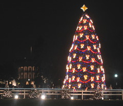 National Christmas Tree in front of White House