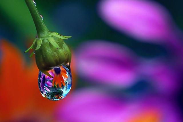 petal puddle