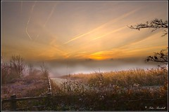 Another Queendown Misty SunRise (lightpainter_album) Tags: uk england sun mist tree field sunrise fence kent corn early morning sunrise misty