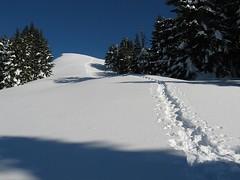 snowshoer tracks