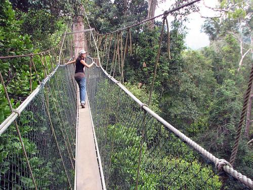 malaisie_taman_negara_canopywalckway