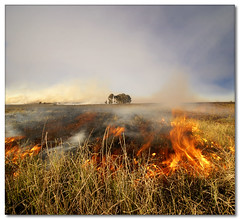 Controlled Burn (Vertorama) (Panorama Paul) Tags: soe hotstuff controlledburn durbanville themoulinrouge veldfire wherearethemarshmallows shieldofexcellence anawesomeshot diamondclassphotographer flickrdiamond incrediblenature flickrelite goldstaraward