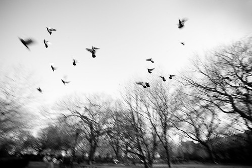 Flock of Birds, Thompson Square Park