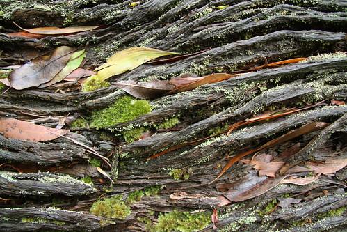 Log textures.