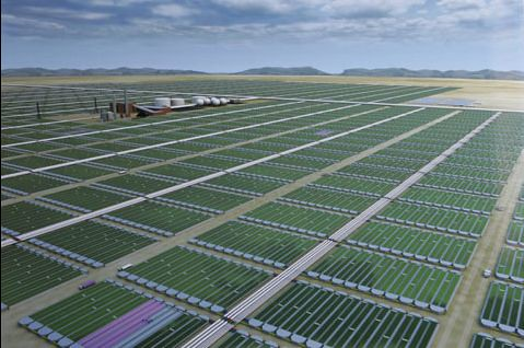 Image of biofuel made of Algae