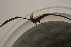 Pterodactyl (quinn.anya) Tags: flying dinosaur fieldmuseum hanging pterodactyl quinns23rdbirthday