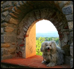 Hokhiko's Watch Tower (! .  Angela Lobefaro . !) Tags: sunset italy dog chien pet sun mountains alps cute brick castle beautiful berg animals cane montagne puppy soleil countryside interestingness pretty italia sweet stones gorgeous country perro explore campagna piemonte cao hund cachorro nubes bichon cachorros lovely chateau sole schloss biella sonne alp castello medievale piedmont castillo animali perrito burg italians watchtower bolognese mediaeval middleage caes cae cagnolino 25aprile  firstquality fris dogsallowed i500 natuzzi biellese abigfave aplusphoto hokhiko castellodivaldengo holidaysvacanzeurlaub visitpiedmont mittlealter angelamlobefaro angelamarialobefaro