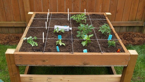 Our Square-Foot Garden