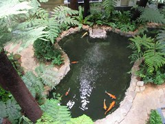 Koi Pond in the Singapore Airport