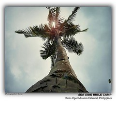 tree  for all season (V_E_G_Z) Tags: ilovemothernature flickraward diamondstars doubledragonawards flickrgiants garbongbisayainternationalphotographersclub championsphotography flipfloppinphotography bisdakplanet