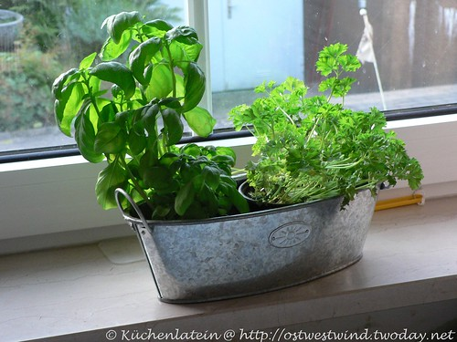 Basil and Parsley on the windowsillWHB#104
