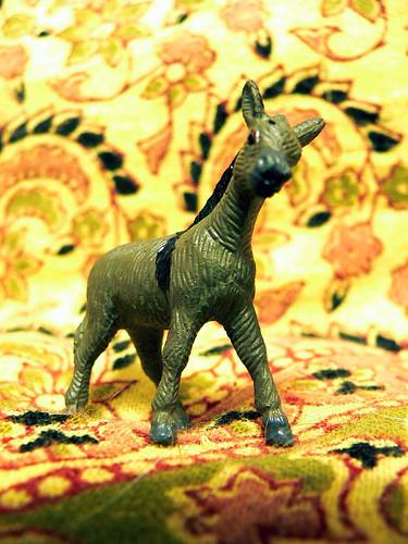 miniature donkey 1
