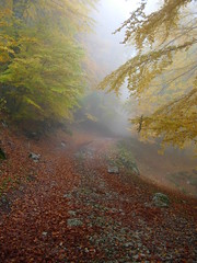 Misty Road (my favourite picture) (Tauromardo) Tags: wood autumn italy mist fall nature fog forest trekking italia hiking natura basilicata nebbia autunno beech bosco foresta lucania appennini apennines fagussylvatica naturesfinest escursione marsicovetere faggeta volturino calvello naturalisti montidellamaddalena bestflickrphotography