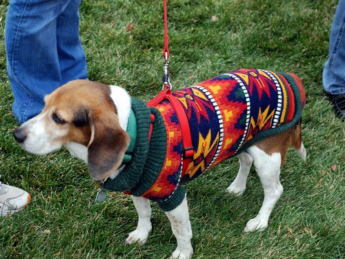 Reindog 31: A Navaho blanket is Christmas-LIKE, isn't it?