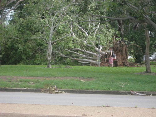 Tree blown over by Cyclone Helen