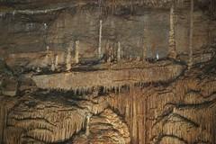 IMGP0688 (David J. Thomas) Tags: students caves arkansas caverns biology astrobiology blanchardspringscaverns lyoncollege bio100