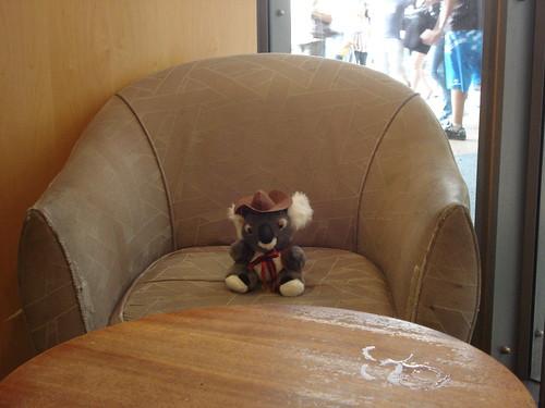 koala perdido en el starbucks