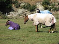 Makara Horse_001 (TELPortfolio) Tags: newzealand horse south valley wellington makara 10millionphotos jalalspagesanimalkingdom southmakara