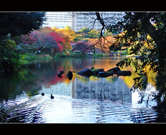 Tokyo Korakuen Garden (Megara Liancourt) Tags: japan garden tokyo 日本 東京 reflexions korakuen sonydscf828 後楽園 庭園 goldenglobe digitalcameraclub mywinners abigfave colorphotoaward superbmasterpiece platinumheartaward artlegacy naturallyartificial llovemypic naturallyartificialc01