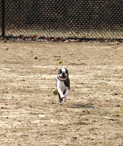 Tobi runs!