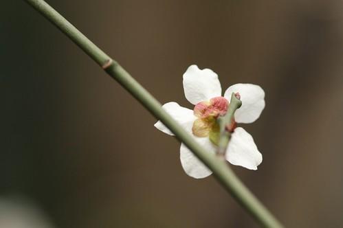 plum flower -back shot