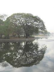 Ulsoor Lake Reflections